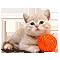 Кот с клубком