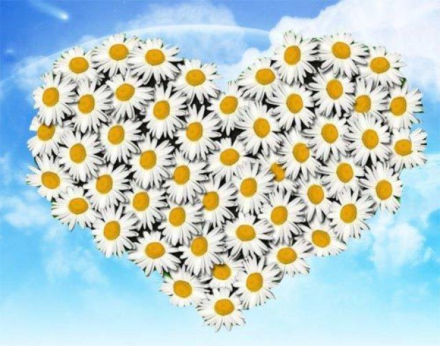 Ромашки ко дню семьи любви и верности
