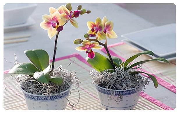 Орхидея уход в домашних условиях что делать с корнями