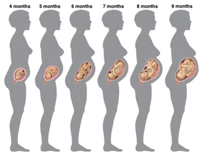 Принимала вермокс не знала что беременна 34