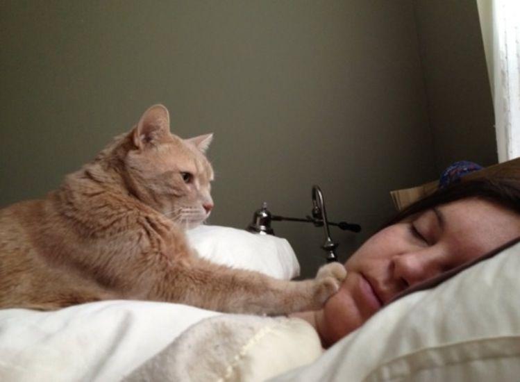Картинки по запросу Обязанности кота по дому